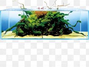 Aquarium Aqua Design Amano Water Garden Aquascaping Aquatic Plants PNG
