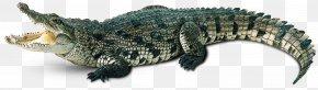 Crocodile - Crocodile Alligator Gharial Caiman PNG