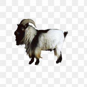 Goat - Boer Goat Nigerian Dwarf Goat Sheep Cattle PNG