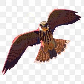Vector Eagle - Eagle Drawing DeviantArt PNG