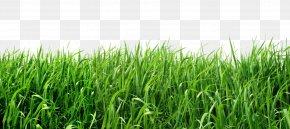 Grass - Lawn Clip Art PNG