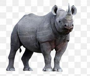Vladimir Putin - Javan Rhinoceros Horn Animal Endangered Species PNG