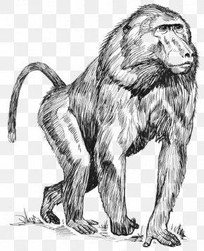 Monkey - Mandrill Drawing Hamadryas Baboon Clip Art PNG
