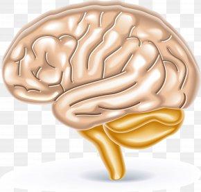 Brain Trainer Brain GamesBrain Teaser 2 School Of Dragons Brain CalculatorHuman Brain Diagram Elements - Brain Games PNG