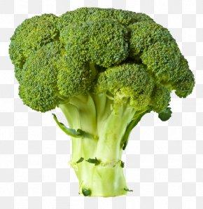 Broccoli - Broccoli Vegetable Clip Art PNG