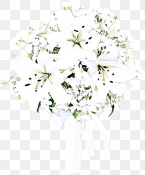 Heracleum Plant Petal - White Flower Plant Cut Flowers Bouquet PNG