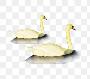 Goose - Duck Goose Ganso Poster PNG