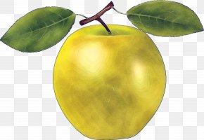 European Plum Woody Plant - Fruit Tree Leaf Plant Food PNG