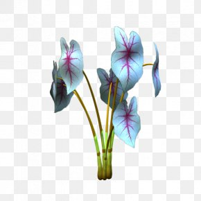 Violet - Violet Cut Flowers Plant Stem Violaceae PNG