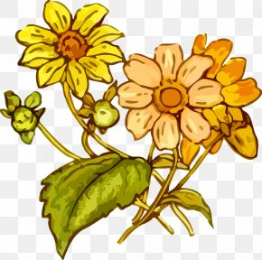 Flower Drawing - Flower Drawing Clip Art PNG