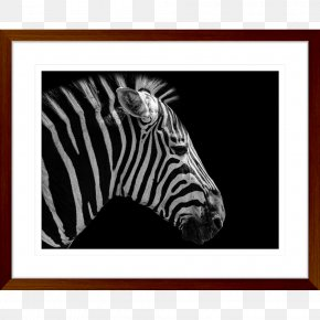 Butterfly - Butterfly Social Media Quagga Business Marketing PNG