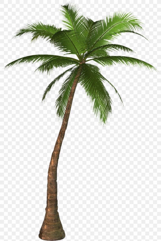Arecaceae Clip Art, PNG, 1023x1533px, Arecaceae, Arecales, Blog, Borassus Flabellifer, Coconut Download Free