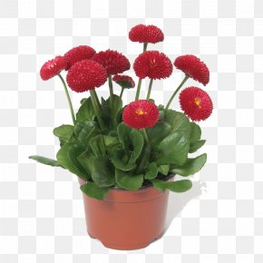 Potted Flower Bouquet - Common Daisy Chrysanthemum Flower Bonsai Seed PNG