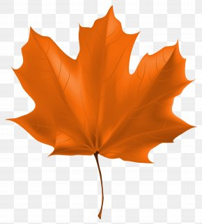 Beautiful Autumn Leaf Clipart Image - Autumn Leaf Color Computer File PNG