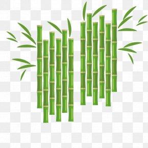 Vector Bamboo Plant - Euclidean Vector Flower Bamboo PNG