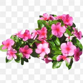 Pink Flowers - Pink Flowers Petal PNG