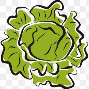 Hand Painted,Stick Figure,Fruits And Vegetables,vegetables,Fruits And Vegetables,Cartoon - Iceberg Lettuce Vegetable Salad Clip Art PNG