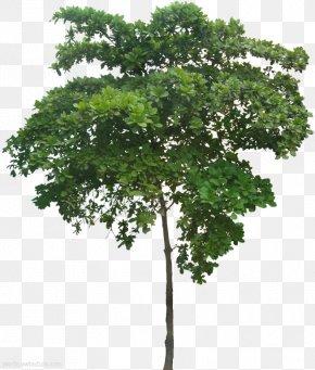 Tree - 3D Computer Graphics Tree 3D Modeling Wavefront .obj File Cinema 4D PNG