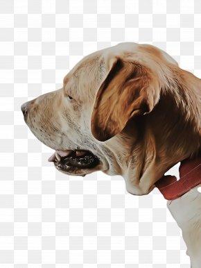 Giant Dog Breed Ear - Cute Dog PNG