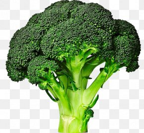Green Vegetables - Broccolini Cabbage Vegetable Broccoli Sprouts PNG