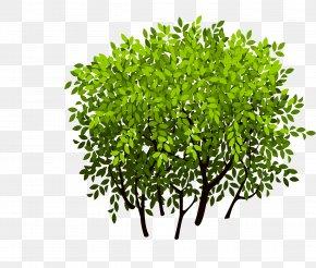 Bush - Shrub Tree Leaf PNG