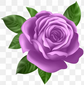 Purple Rose Transparent Clip Art - Rose Purple Clip Art PNG