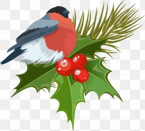 Noel - Mistletoe Christmas Clip Art PNG