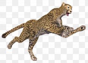 Cheetah - Cheetah Leopard Jaguar 3D Computer Graphics PNG