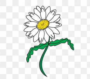 Surround Lines - Drawing Line Art Common Daisy Clip Art PNG