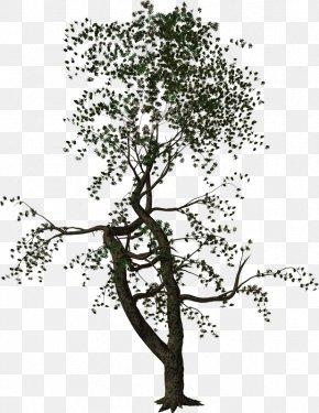 Twigs - Tree Woody Plant Shrub Twig PNG