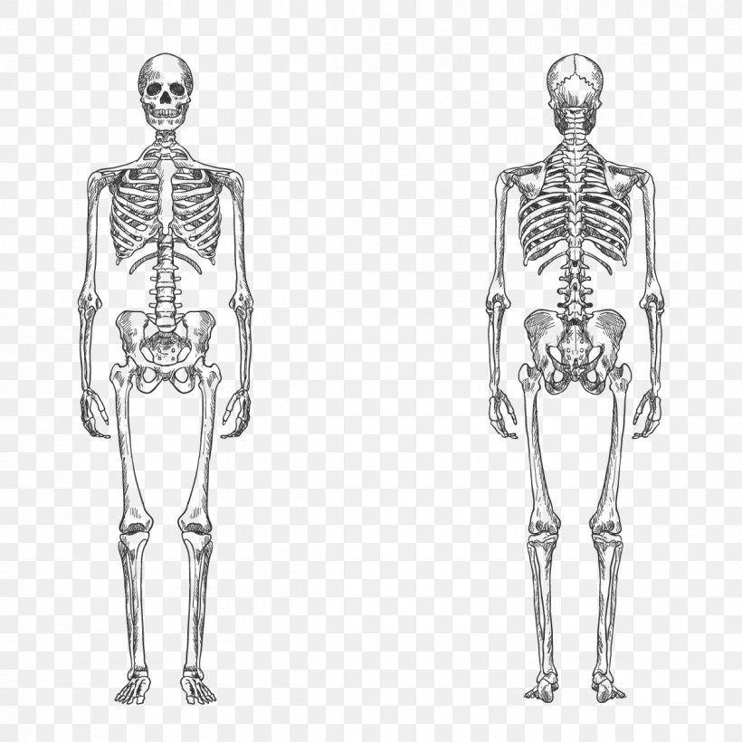 Download Human Body Vector Png