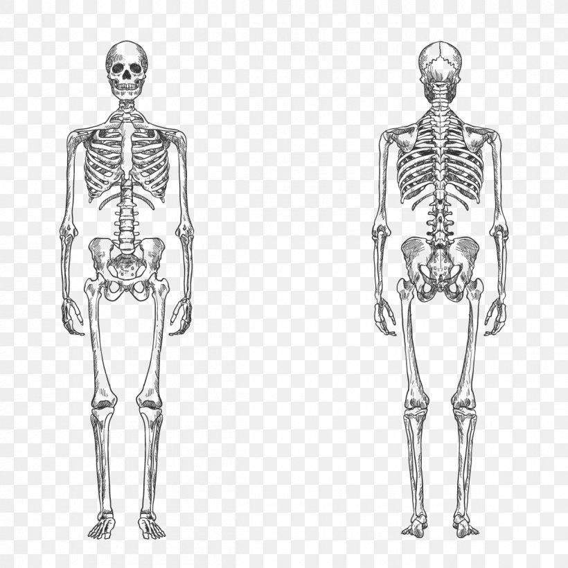 Download Human Body Vector Png