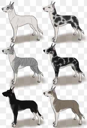 Great Dane Silhouette - Italian Greyhound Whippet Spanish Greyhound Sloughi PNG