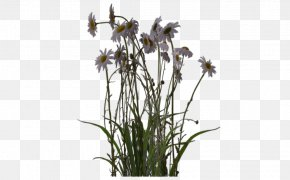 Desert Plants - DeviantArt Plant Digital Art Artist PNG