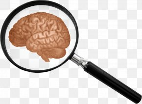 Pictures Of Magnifying Glass - The Human Body: The Brain Magnifying Glass Clip Art PNG