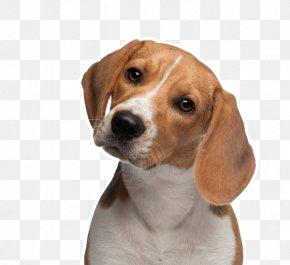 Pets - Beagle Chihuahua Puppy Animal Testing PNG