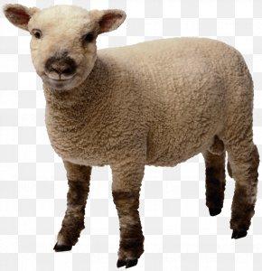 Sheep Image - Sheep Clip Art PNG