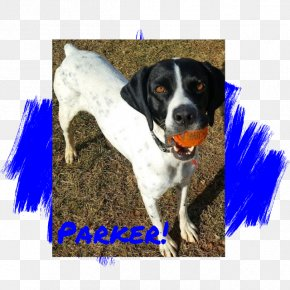 Creative Pet Dog - Treeing Walker Coonhound Black And Tan Coonhound Hunting Dog Dog Breed PNG