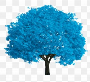 Blue Tree - Salix Fragilis Salix Alba Tree Stock Photography Oak PNG