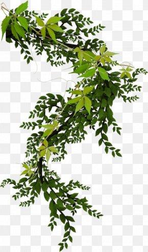 Watercolor Plant - Vine Plant Ivy Clip Art PNG