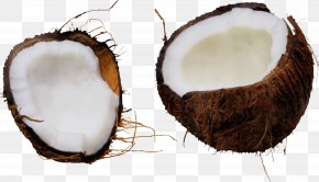 Plant Coconut Water - Coconut PNG