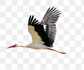 Flying Storks - Bird Stork Icon PNG