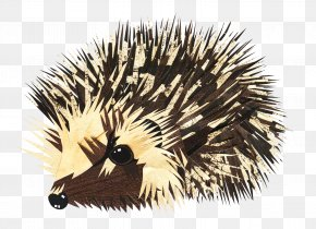 Hedgehog - European Hedgehog Animal Drawing PNG