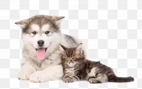 Cute Tongue Puppy - Maine Coon Alaskan Malamute Siberian Husky Bengal Cat Golden Retriever PNG