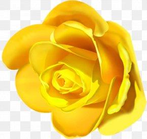 Flower - Garden Roses Lilium Flower Clip Art PNG