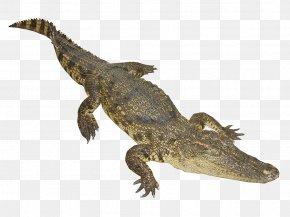 The Bulk Of The Crocodile - Nile Crocodile Google Images Web Crawler Animal PNG
