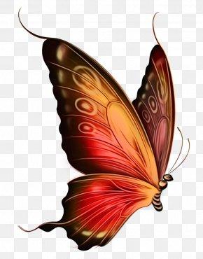 Monarch Butterfly Wing - Watercolor Butterfly Art PNG