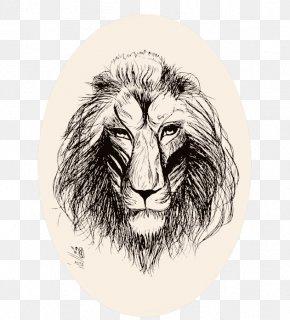 Lion Illustrator - Lion Roar Big Cat Sketch PNG