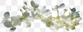 Spring Text Blossom Clip Art PNG