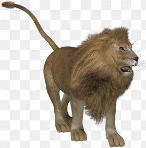 Lion - Lion Tiger Big Cat Animal PNG